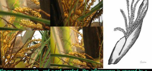 Wild Vegetables – SmallScience