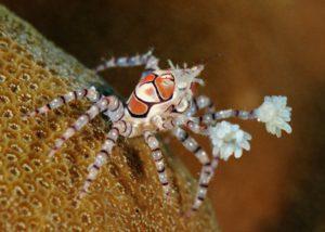 crab4