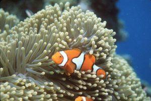 sea-anemone-1