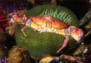 sea-anemone-3