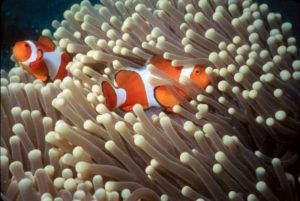 sea-anemone-6