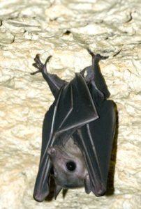 bat-2
